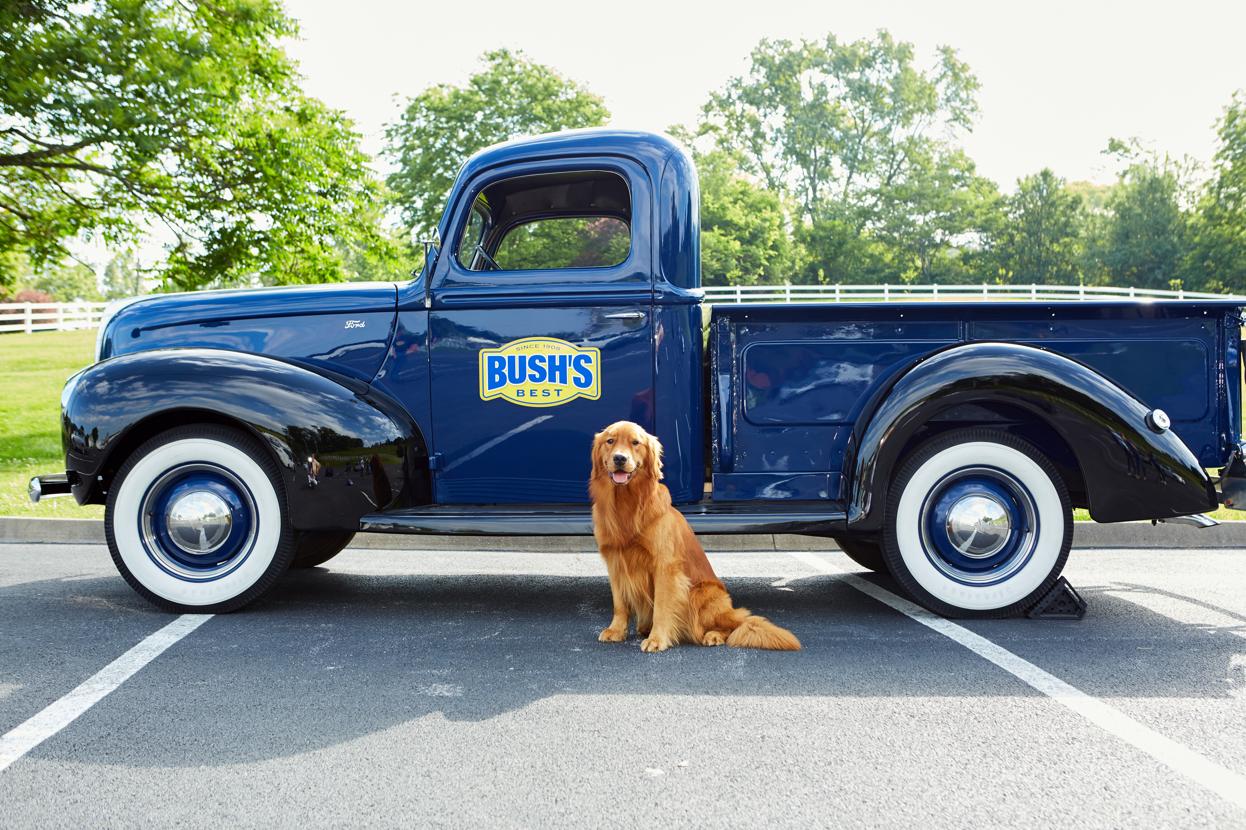 A golden retriever in front of a vintage pickup truck