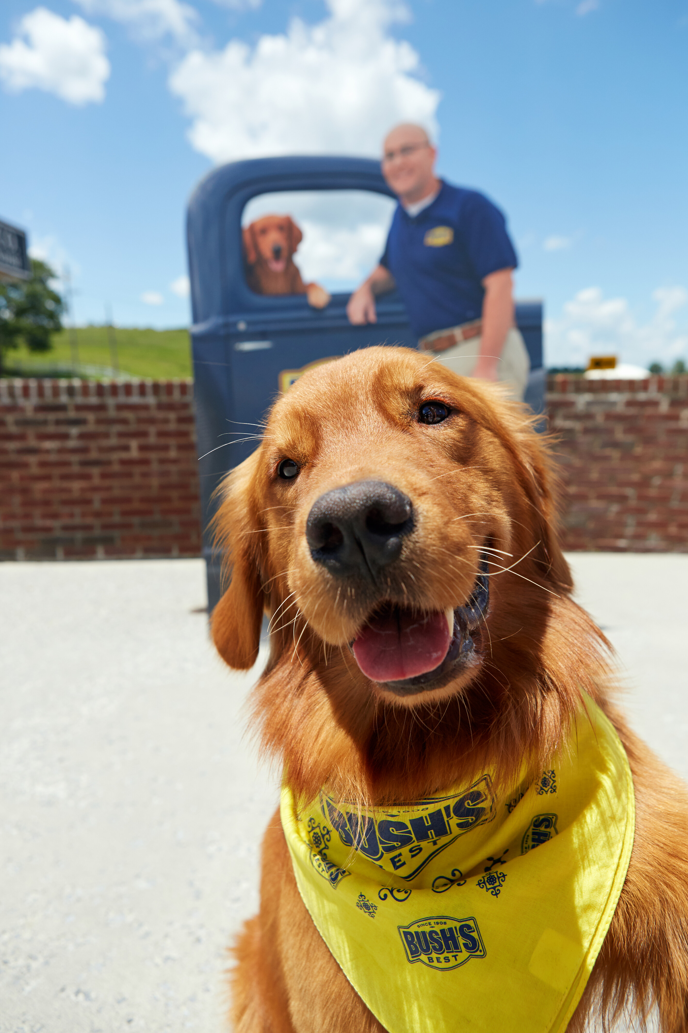 A golden retriever wearing a bandana smiling in front of a man and a vintage pickup truck