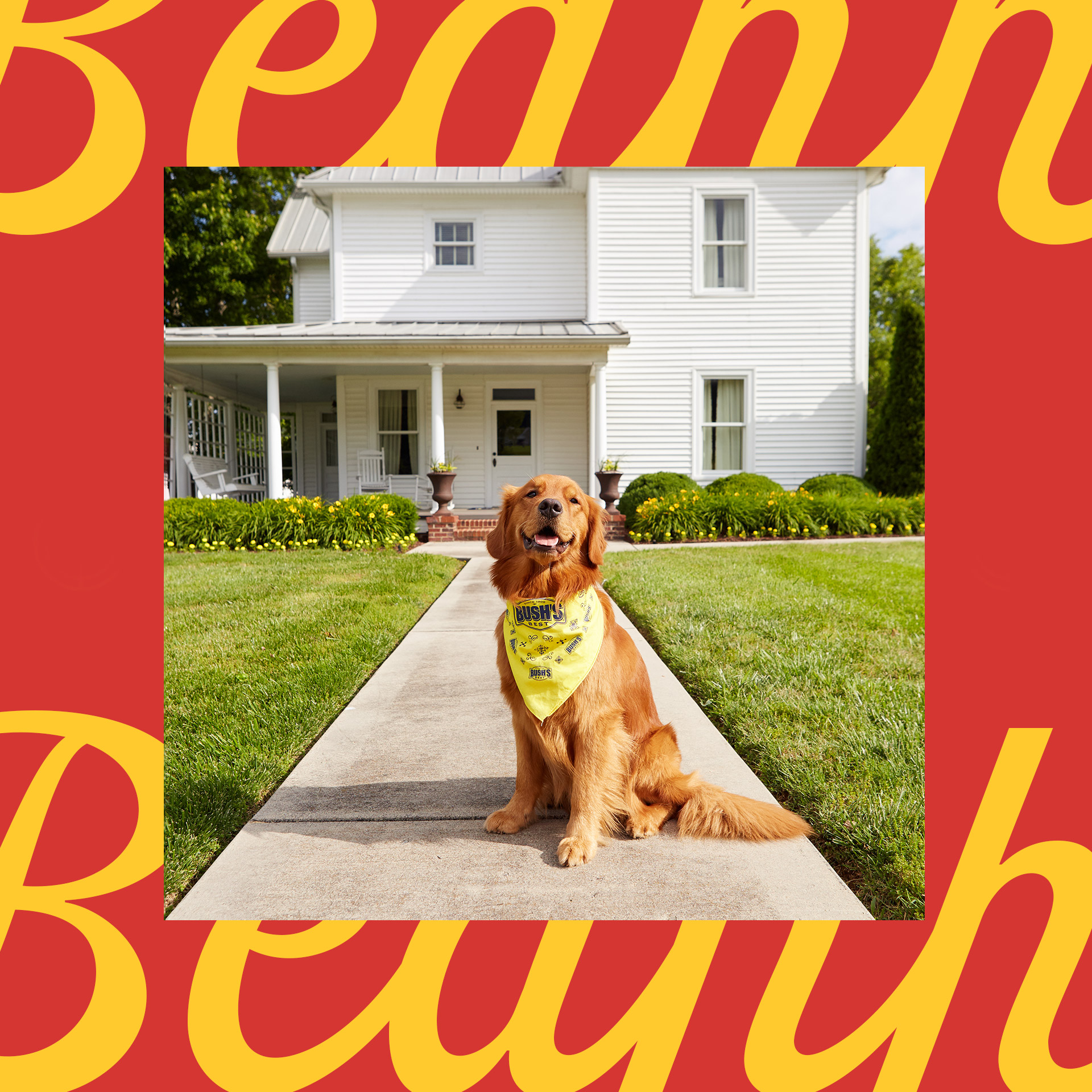 Bush's Beans mascot dog Duke standing in front of a white house with front porch wearing yellow bandana